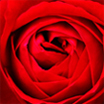 Rose - Design Css